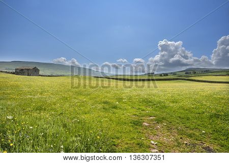 Wildflowers across a meadow on a sunny day