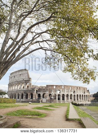 Colosseum in Rome city Italy with tree