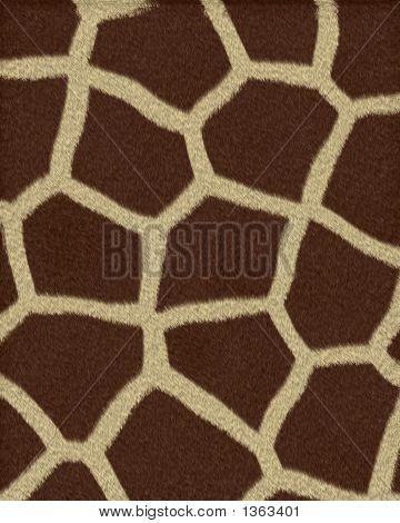 Giraffe Large Spots Short Fur