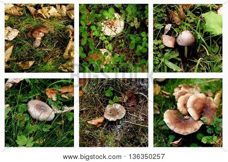 Collection of Various Forest Non-Edible and Conditionally Edible Mushrooms between Green Grass and Dry Leafs Outdoors. Selective Focus