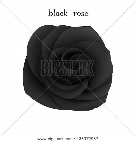 Black Rose. Isolated Flower on a White Background. Mesh Gradient was used. EPS-8.