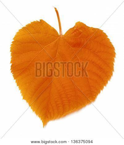 Autumnal Leaf On White