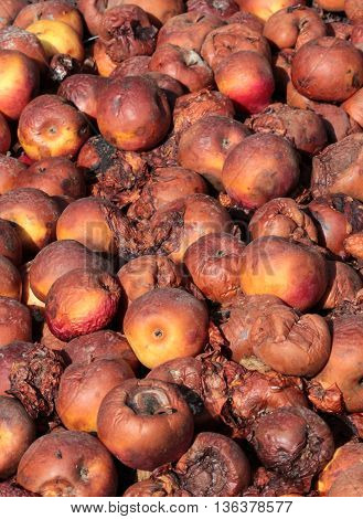 picture of a Rotten apples.organic pollution concept