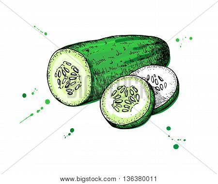 Cucumber hand drawn vector. Isolated cucumber and sliced pieces. Vegetable engraved style illustration. Detailed vegetarian food drawing. Farm market product.
