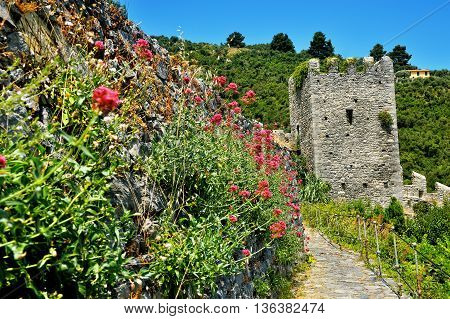 ancient tower of castle with willow herb in Portovenere