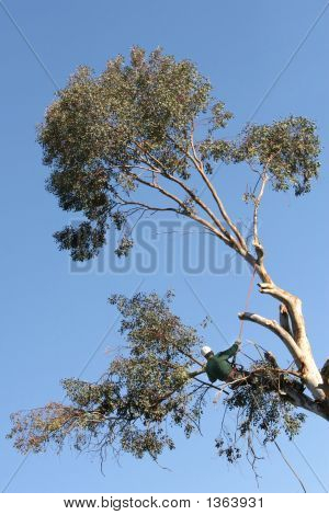 Tree Trimmer 1