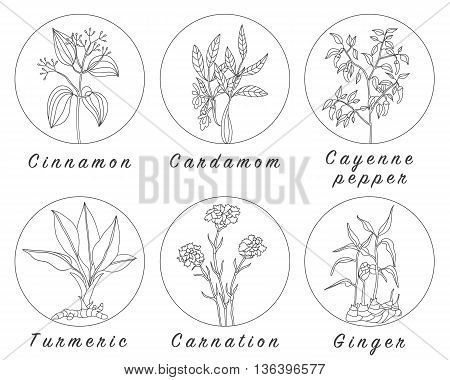Set of spices herbs and officinale plants icons. Healing plants. Medicinal plants herbs spices hand drawn illustrations. Botanic sketches icons. poster