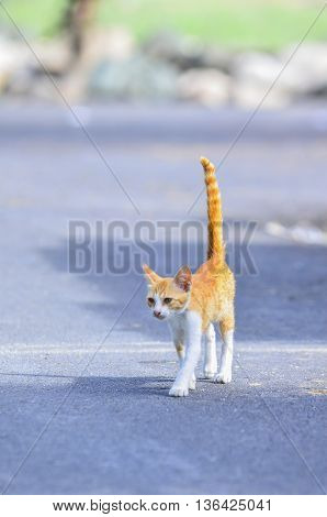 yellow and white cute cat at outdoor