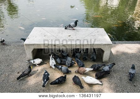 alone pigeon on cement bench  side a canal