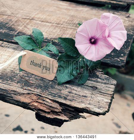 Thank You Background, Violet Flower