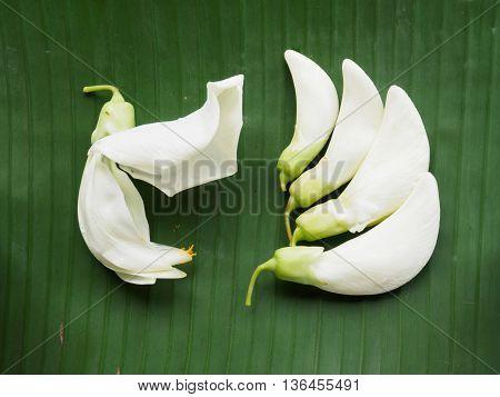 White sesban vegetable on banana leaf background