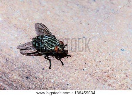 a macro shot of a fly on a brown backround