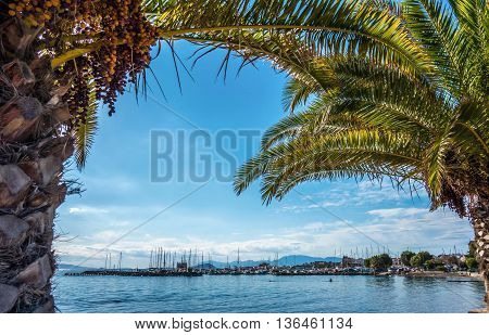 The island of Aegina, Greece, viewed from the shade of palm trees