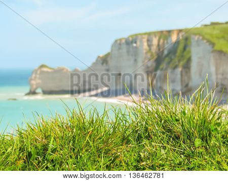 Wild flowers on the seacoast and famous cliff La Falaise d'Amont as background. Etretat, Normandy, France. Selective focus