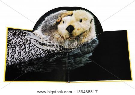 KIEV UKRAINE - April 19 2011:Open book with pictures of animals. Isolated on white background children's book illustration with the image of a nutria (otter)