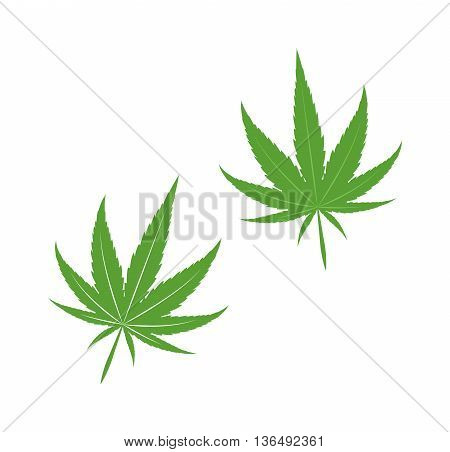 Cannabis marijuana leave eco design elements Leaf icon vector illustration friendly nature elegance symbol. Decoration marijuana leaf icon. Cannabis marijuana symbol green organic leave