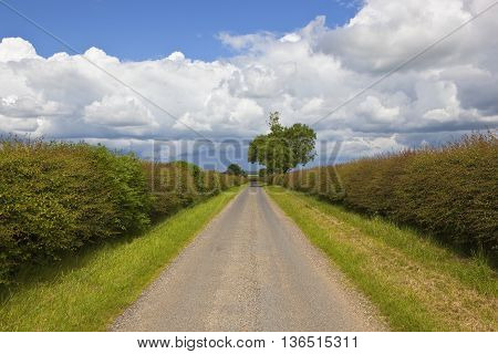 Road With Hawthorn Hedgerow