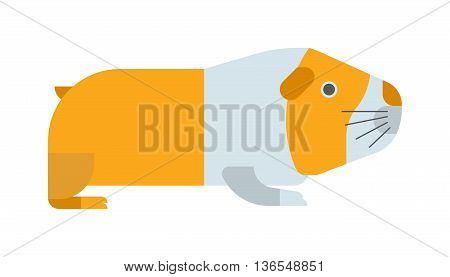 Guinea pig on white background. Cute vector rodent mammal brown small domestic guinea pig. Adorable fur portrait funny guinea pig. Cavy animal character small hamster adorable guinea pig.
