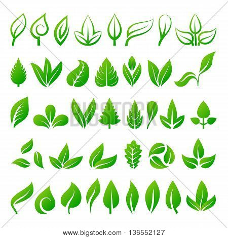 Set of green leaves eco design elements. Leaf icons vector illustration friendly nature elegance symbol. Decoration flora leaf icons set. Natural element ecology symbol green organic set.
