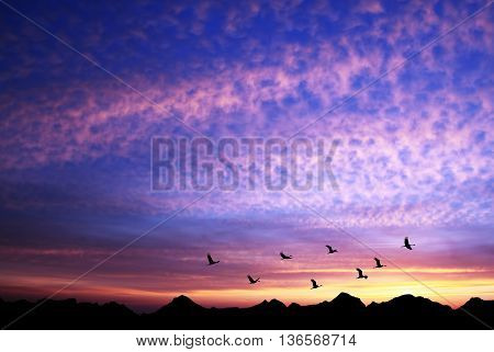 Sandhill Cranes in Flight at Sunrise above the Mountains Panoramic view