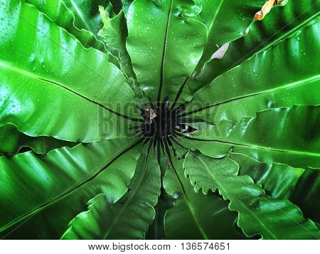 Center close up of a green leave of fern