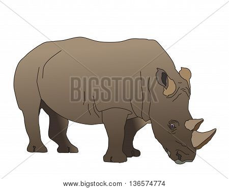 Illustration the south-western adult black rhinoceros has two horns living in southwestern Africa
