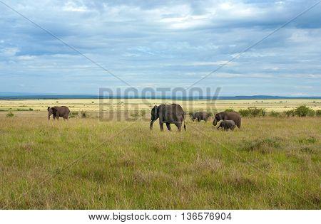 Elephants In Maasai Mara National Park, Kenya.