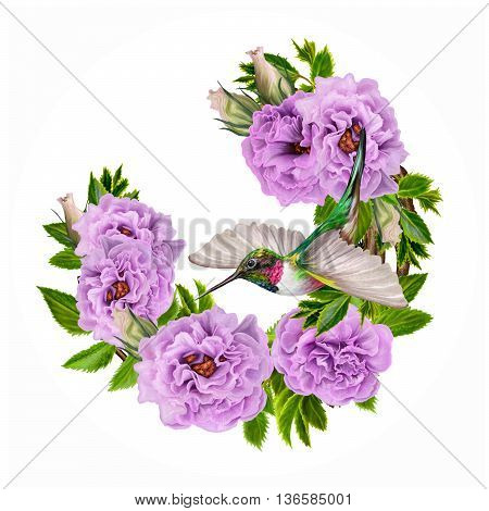 Little bird hummingbird and a branch of flowering lilac pink purple roses in a circle. Painting. Round form. Isolated white background.