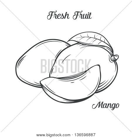 Hand drawn mango icon. Vector illustration  mango in old ink style. For brochures, banner, restaurant menu and market