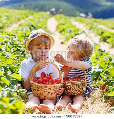 Two little sibling kid boys having fun on strawberry farm in summer. Chidren eating healthy organic food, fresh berries.
