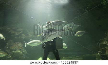 Scuba Diver Feed Fish In Aquarium