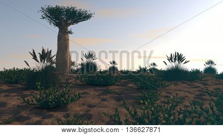 3d illusration of baobab tree in sunset light