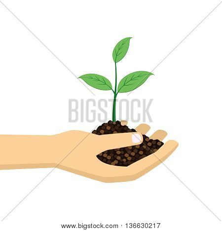 green plant in hand on the white background.