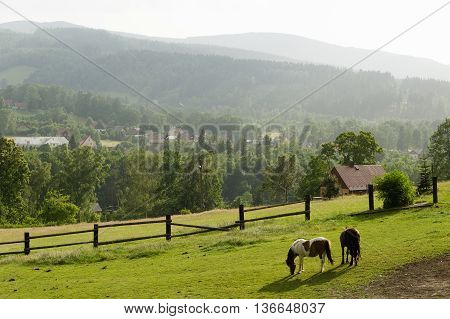 European summer farmland scene with two horses