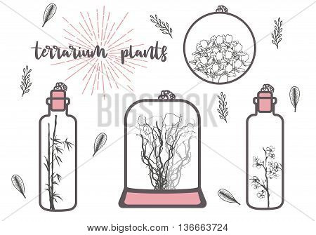 Cute terrarium plants. Vector design element for greeting cards , wedding invitations and prints