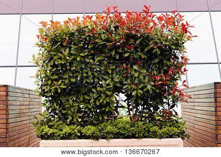 Concrete Jardiniera