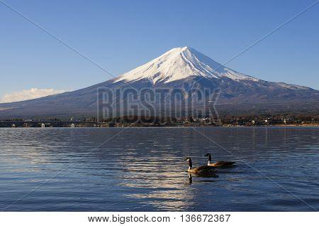 Geese And Mt Fuji View From Lake Kawaguchiko