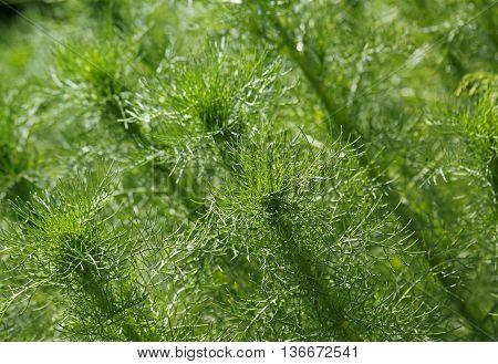Green plants background. Close-up photo. Oblique frame.
