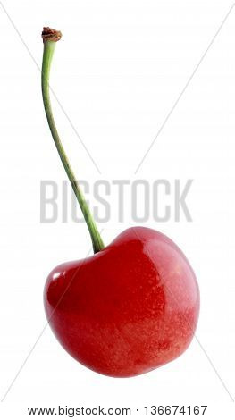 Single red sweet cherry on white background