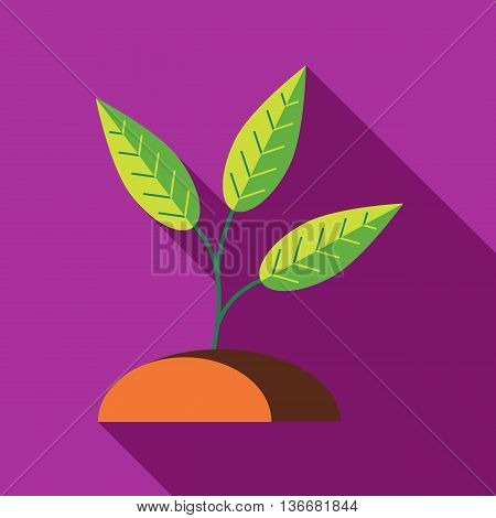 Green sprout in the ground icon in flat style on a fuchsia background