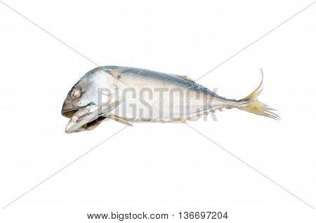 fresh indian mackerel fish on white background