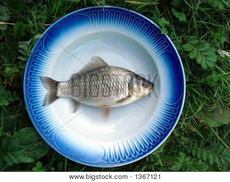 White Fish (A Crucian Lake)