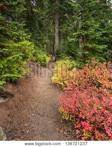 Early fall colors on the Wonderland Trail, in Mount Rainier National Park, Washington.