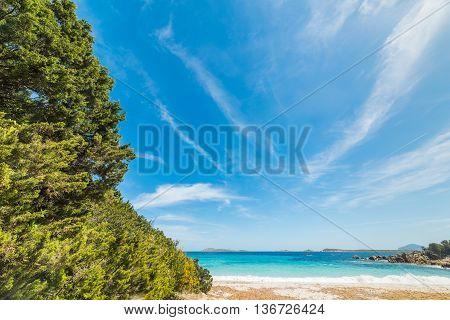 plants in Capriccioli beach in Costa Smeralda Italy