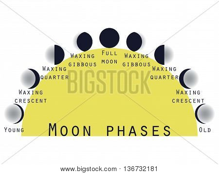 The phases of the moon. Lunar phase. Moon stages. Vector illustration.