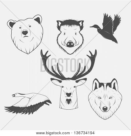pictures of animals bear wolf deer ducks geese wild boar