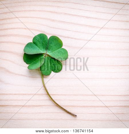 Clovers Leaves On Stone .the Symbolic Of Four Leaf Clover The First Is For Faith, The Second Is For
