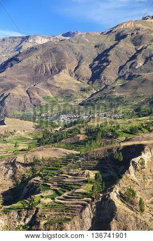 Stepped Terraces In Colca Canyon In Peru