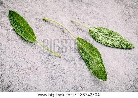 Closeup Fresh Sage Leaves  On Stone Background. Alternative Medicine Fresh Salvia Officinalis. Fresh