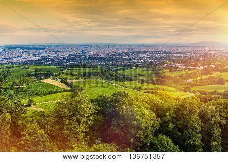 Vienna Vineyards and the Vienna Cityscape Panorama. Beautiful Summer Sunset in Vienna Austria Europe.